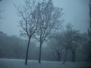 Ice trees on approach to Wien, Jan 2009